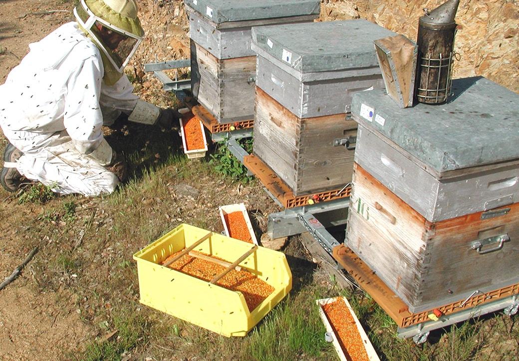 apiculteur hyeres