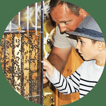 Musée - enfant et adulte abeille
